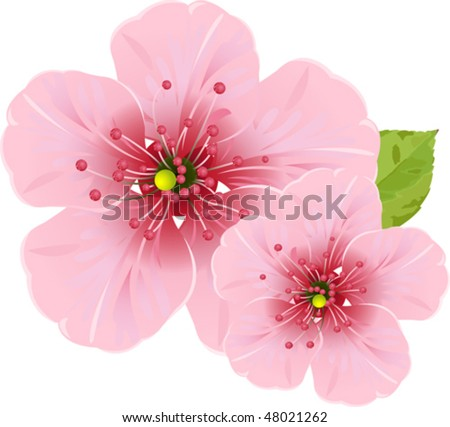Illustration of cherry blossom flowers for your design needed - stock vector
