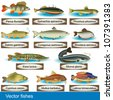 Illustration of different kind of fishes, along with their Latin names. - stock vector