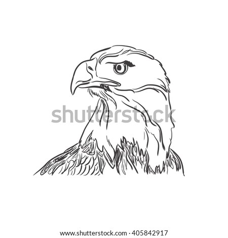 Illustration of eagle face in sketch style, vector  - stock vector