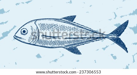 Illustration of fish (jack) in sketch style, underwater edition - stock vector