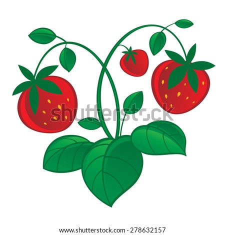 Illustration of fresh and juicy red strawberry - stock vector