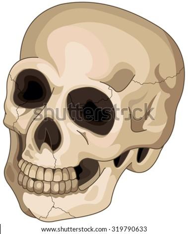 Illustration of Halloween skull  - stock vector