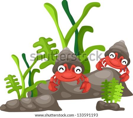 Illustration of  hermit crab white background - stock vector