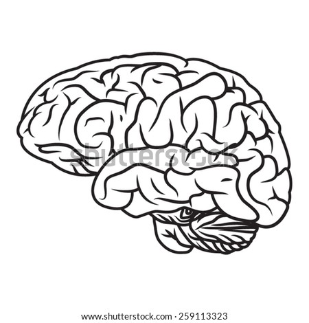 Illustration of human brain. - stock vector