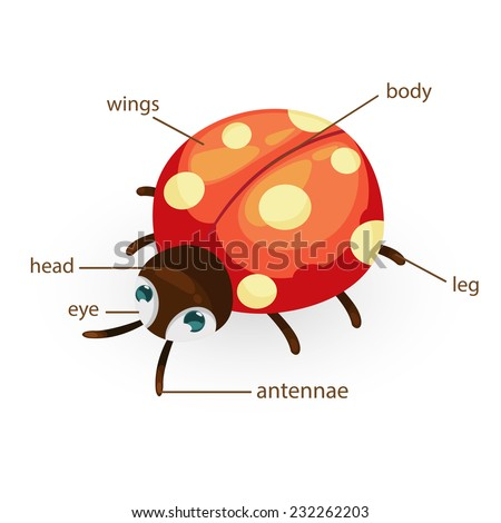 Animal body part stock photos images amp pictures shutterstock