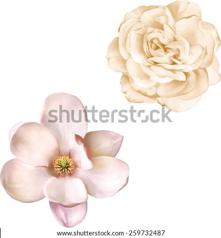 illustration of light pink rose and magnolia flower isolated on white background - stock vector