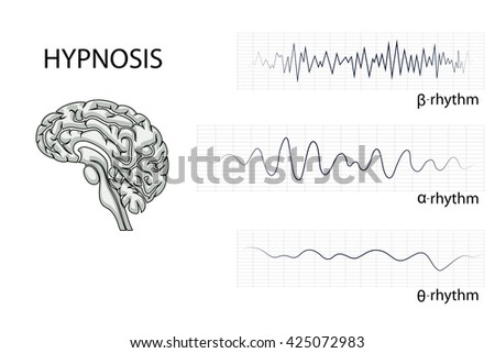 illustration of the brain, alpha, beta, and theta rhythm. - stock vector