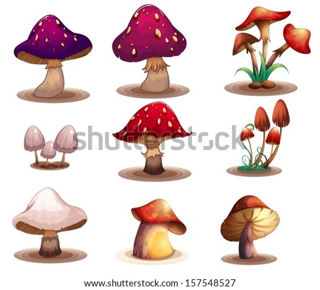 Illustration of the different kinds of mushrooms on a white background - stock vector