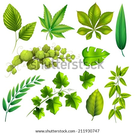 Illustration of the different leaves on a white background - stock vector