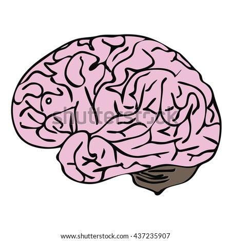 Illustration of the human brain - stock vector