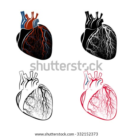 ILLUSTRATION of the human heart. - stock vector