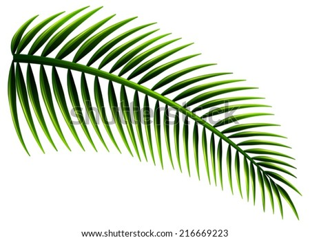 Illustration of the palm leaves on a white background - stock vector