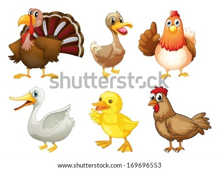 Illustration of  the six different birds on a white background - stock vector