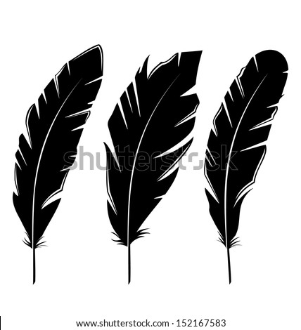 Illustration set feathers isolated on white background - vector - stock vector