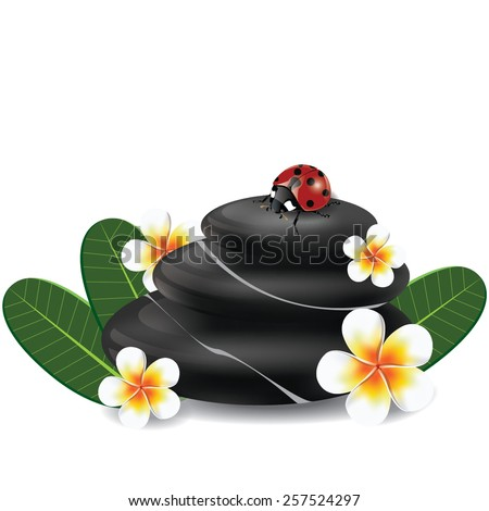 illustration. spa concept with zen stones and frangipani flower on white - stock vector