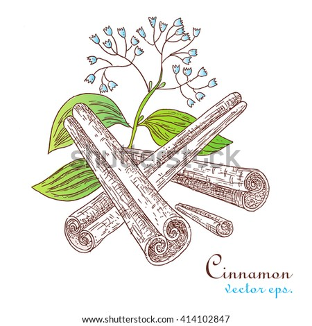 Illustration spice cinnamon stick. - stock vector