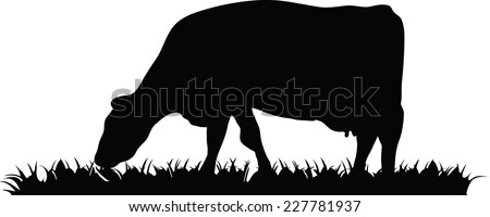 Illustration. Vector silhouette of a cow eating grass in a field or pasture.  - stock vector