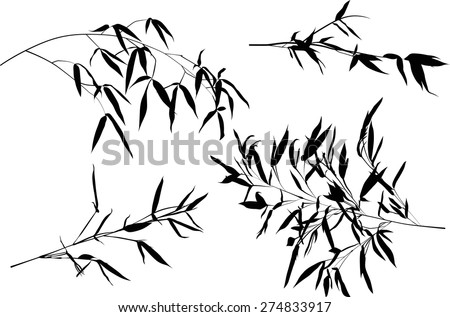 illustration with bamboo branches collection on white background - stock vector