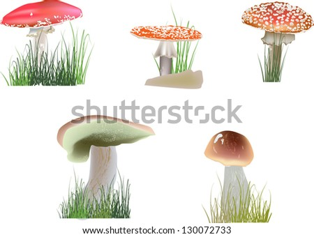 illustration with color mushrooms in grass on white background - stock vector