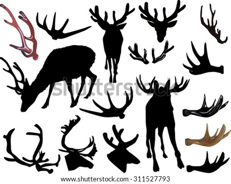 Antler as well Search as well Deer antlers in addition 70535 in addition Puentylizm. on antler set