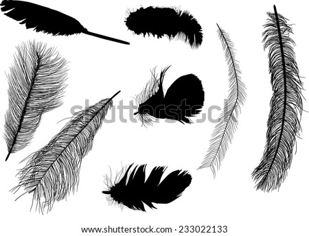 illustration with eight feather silhouettes isolated on white background - stock vector