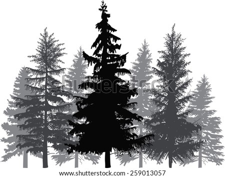 illustration with fir trees forest isolated on white background - stock vector
