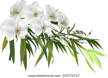 illustration with green bamboo branch and orchid flowers isolated on white background - stock vector