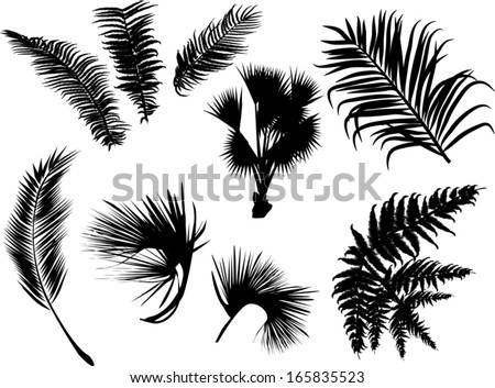 illustration with palm and fern leaves silhouettes isolated on white background - stock vector