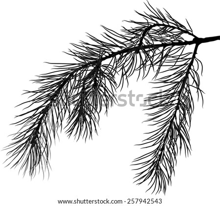 illustration with pine branch isolated on white background - stock vector