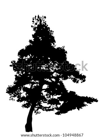 illustration with pine tree silhouette isolated on white background - stock vector
