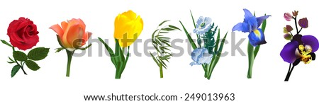 illustration with rainbow colors flowers isolated on white background - stock vector