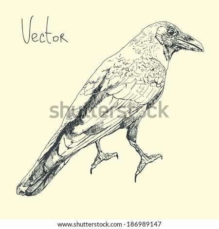 Illustration with raven in vector. - stock vector