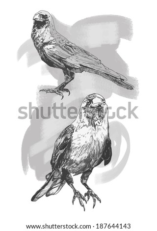 Illustration with ravens in vector. Hand-drawn card. - stock vector