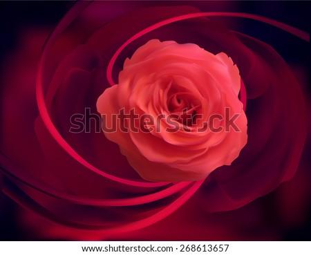 illustration with rose flower on dark background - stock vector