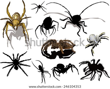 illustration with spiders isolated on white background - stock vector