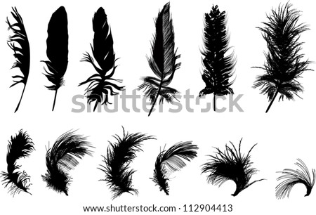 illustration with twelve black feathers isolated on white background - stock vector