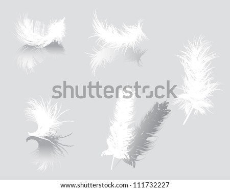 illustration with white feathers isolated on gray background - stock vector