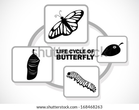 image graphic style of butterfly life cycle isolated on white background - stock vector