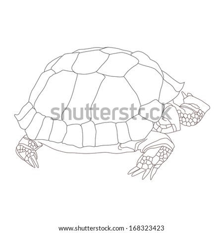 Image of turtle - stock vector