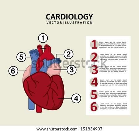 infographics of cardiology design over beige background vector illustration  - stock vector