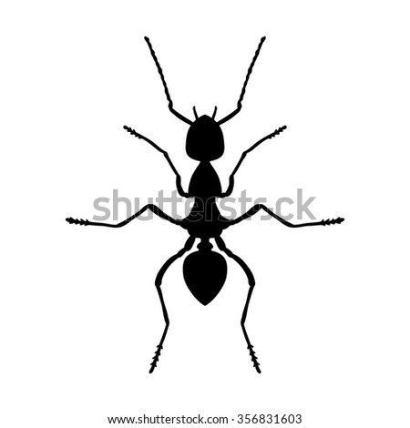 Insect anatomy. Silhouette Formica exsecta. Sketch of ant. Ant . hand-drawn silhouette ant. Vector illustration - stock vector