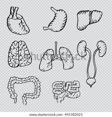Internal human organs hand drawn icons set with - heart, brains, lungs, liver, kidneys, intestine,  stomach.  - stock vector