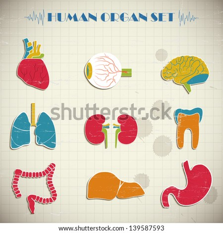 Internal organs. Vector Illustration, eps10, contains transparencies. - stock vector