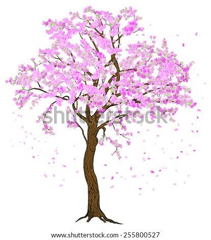 Isolated sakura spring blossom blooming tree with flowers illustration with detailed drawing bark - stock vector