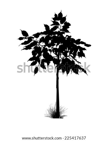 isolated silhouette of  tree. Vector - stock vector