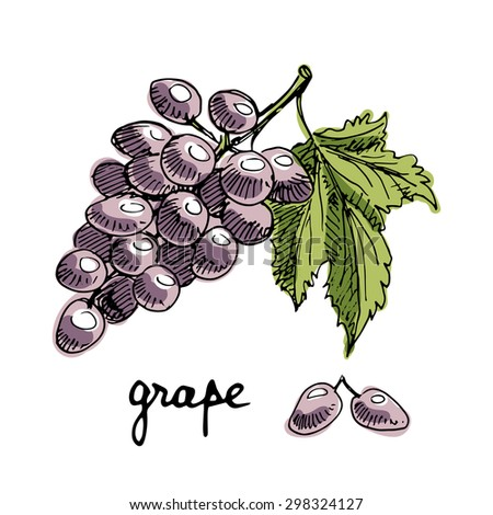 Isolated sketchy style grape/ Doodle fruits/ Hand drawn vector illustration - stock vector