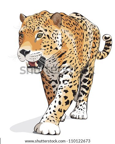 Jaguar, wild cat Panther. Vector illustration, White background, shadow. Photos of jaguars in portfolio - stock vector