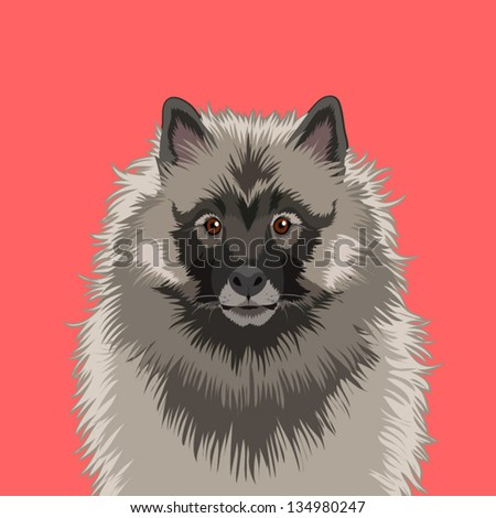 Keeshond, The buddy dog - stock vector