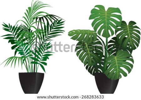 Kentia and philodendron plants in the pots - stock vector