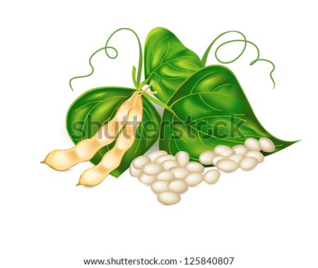 Kidney ( soy ) beans with leaves on white background. Vector eps10 illustration. Raster file included in portfolio - stock vector